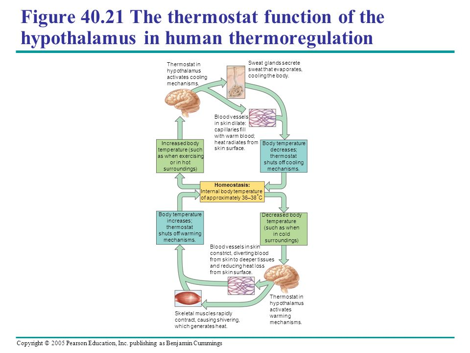 Internal body temperature