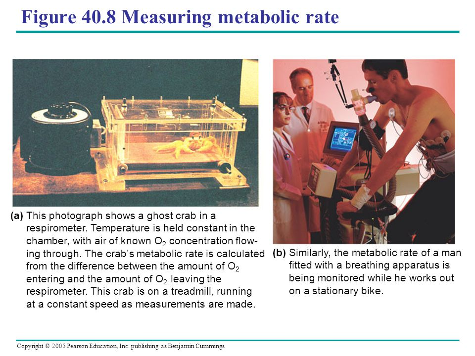 Figure 40.8 Measuring metabolic rate