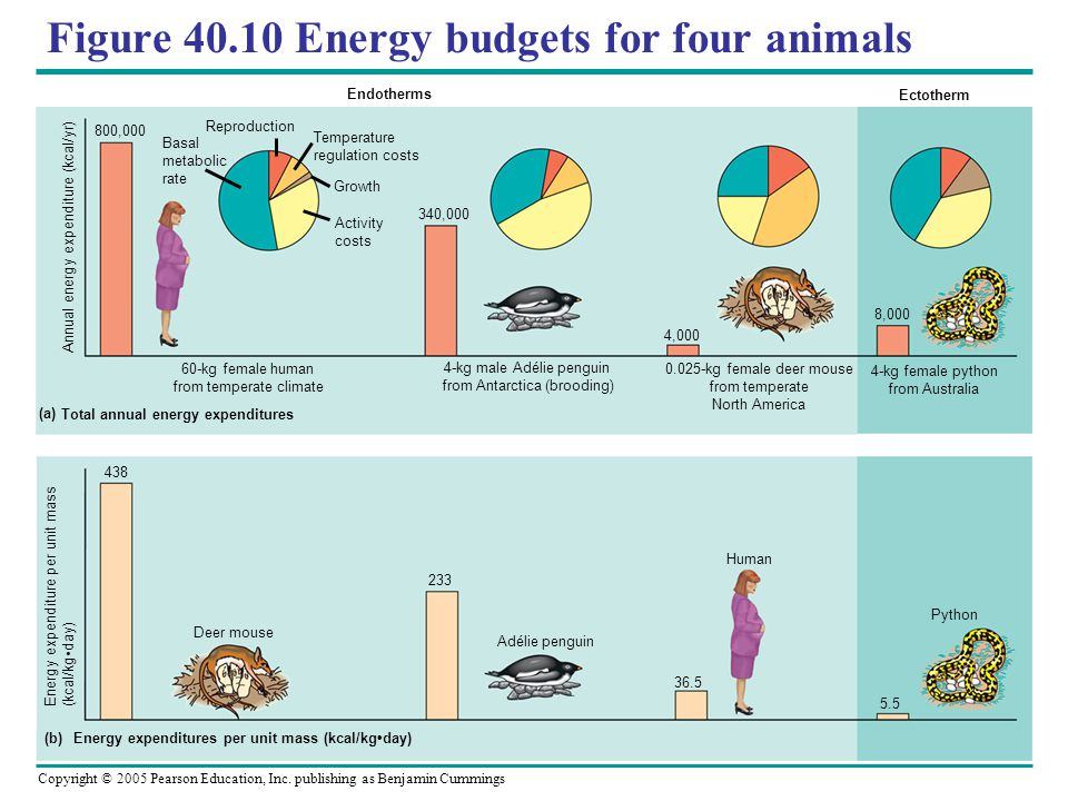 Figure 40.10 Energy budgets for four animals
