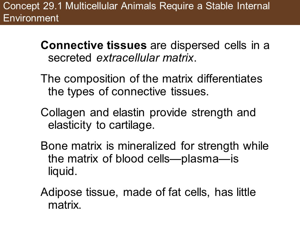 Collagen and elastin provide strength and elasticity to cartilage.