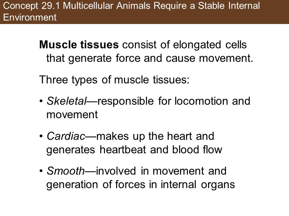 Three types of muscle tissues: