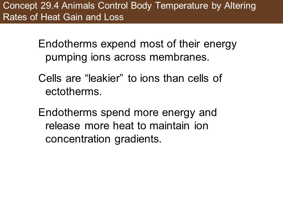 Endotherms expend most of their energy pumping ions across membranes.