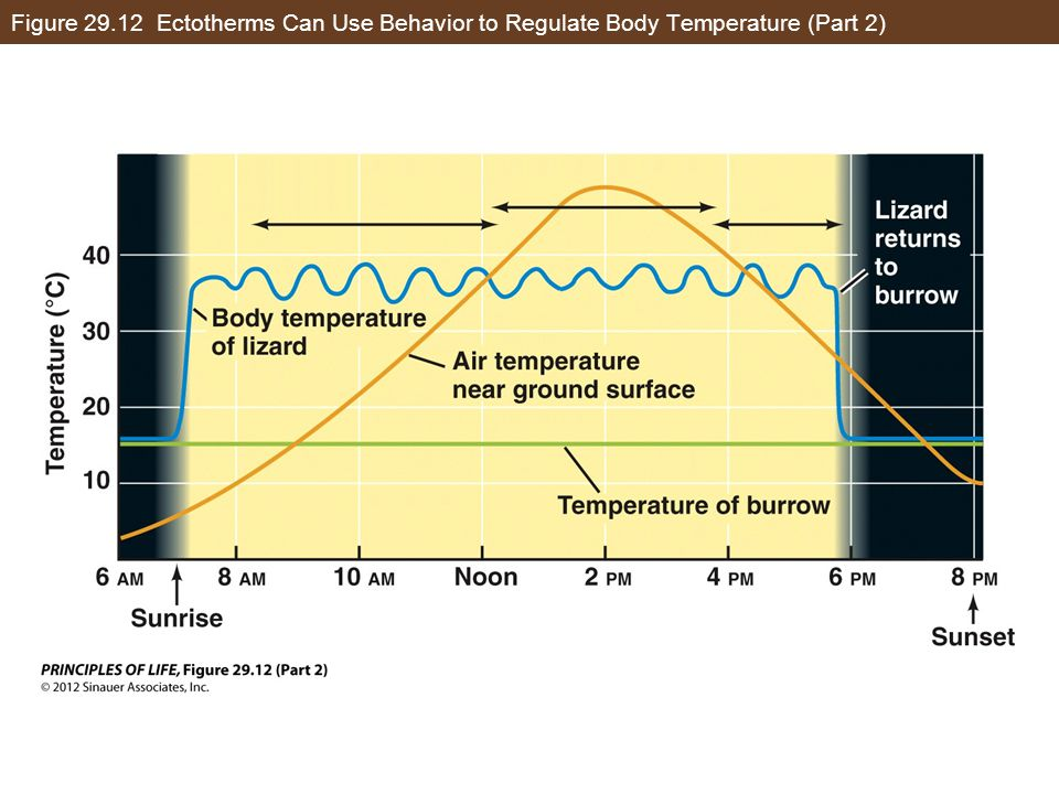 Figure 29.12 Ectotherms Can Use Behavior to Regulate Body Temperature (Part 2)