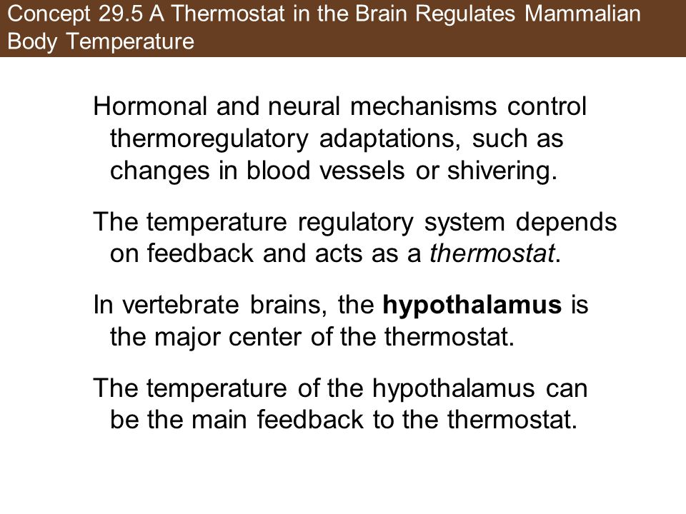 Concept 29.5 A Thermostat in the Brain Regulates Mammalian Body Temperature