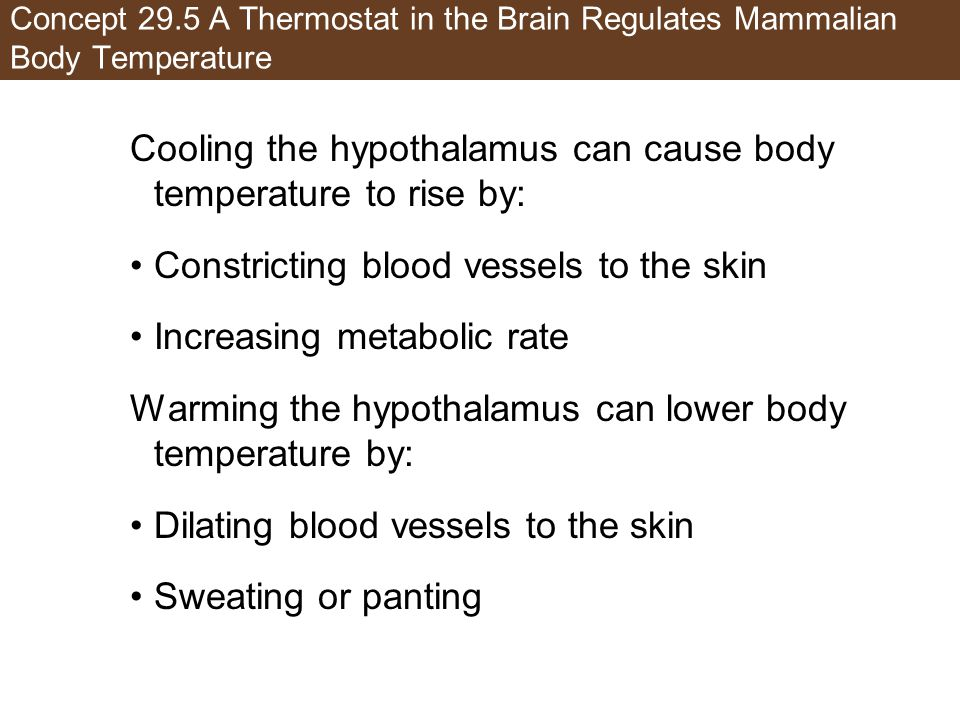 Cooling the hypothalamus can cause body temperature to rise by: