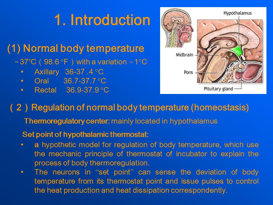 1. Introduction Set point of hypothalamic thermostat: