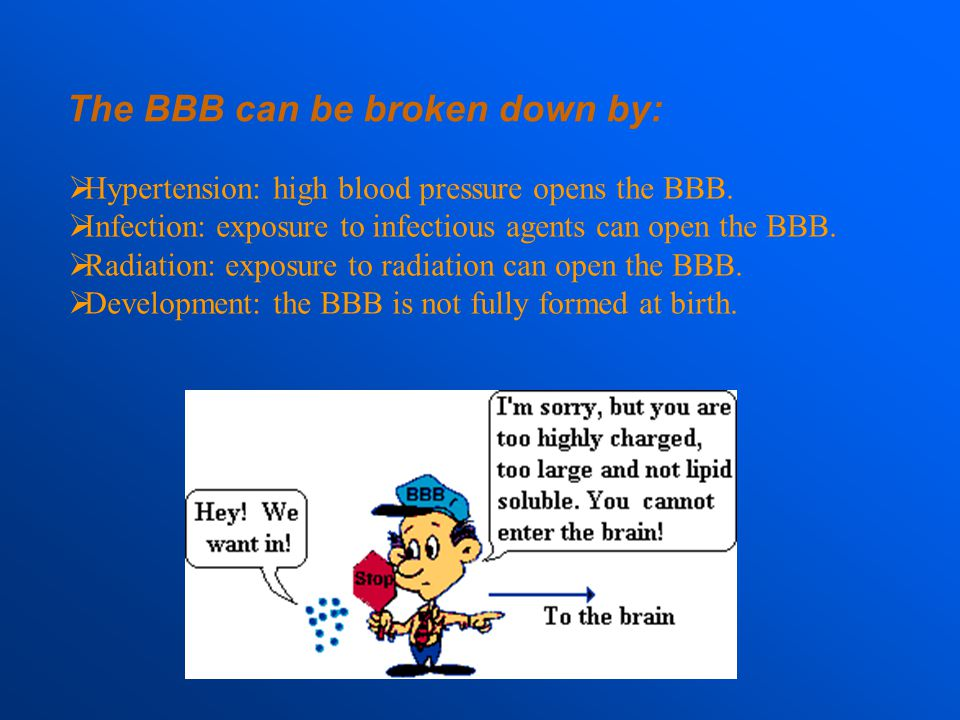 The BBB can be broken down by: