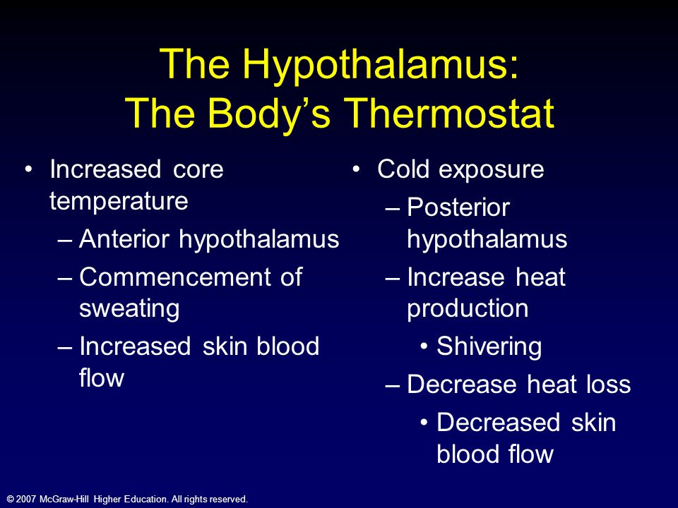 The Hypothalamus: The Body's Thermostat