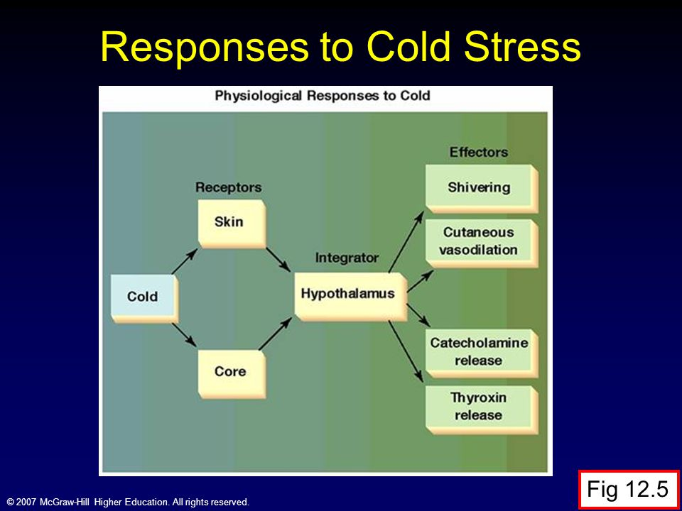 Responses to Cold Stress