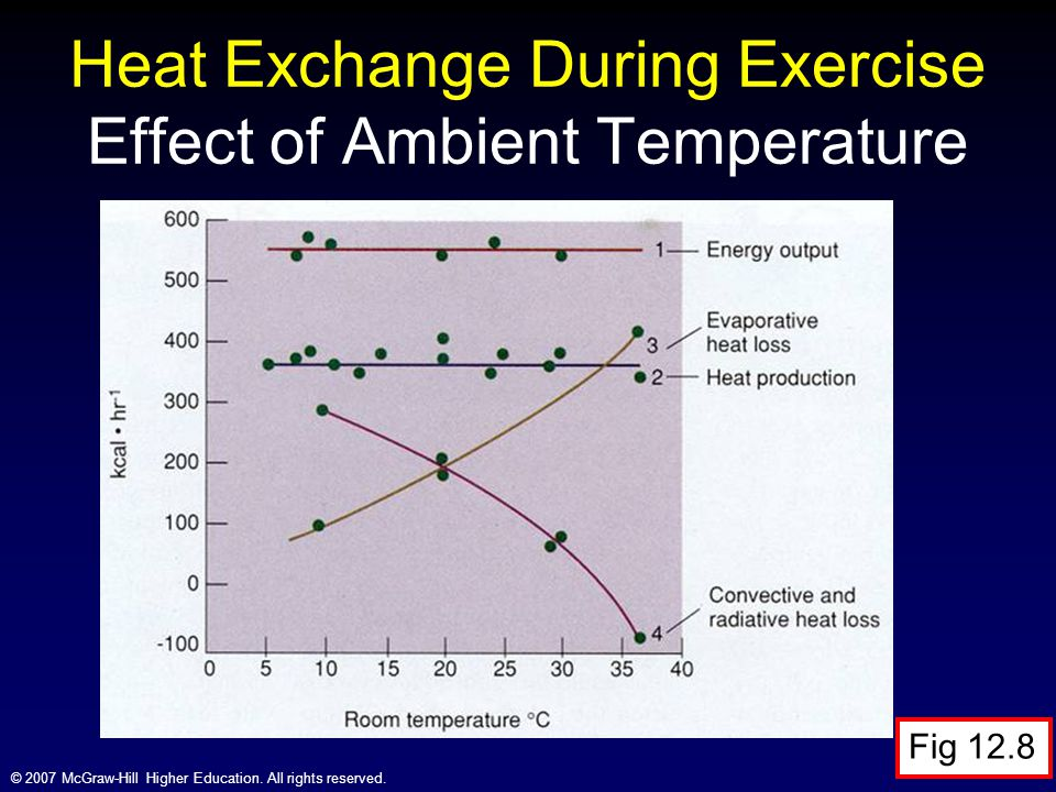Heat Exchange During Exercise Effect of Ambient Temperature