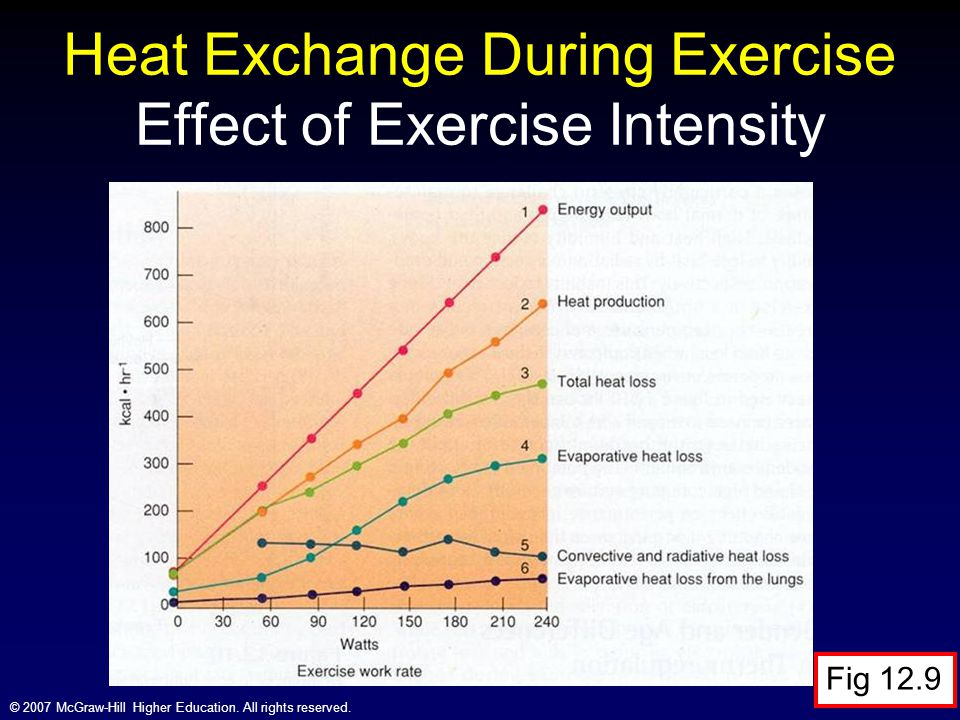 Heat Exchange During Exercise Effect of Exercise Intensity