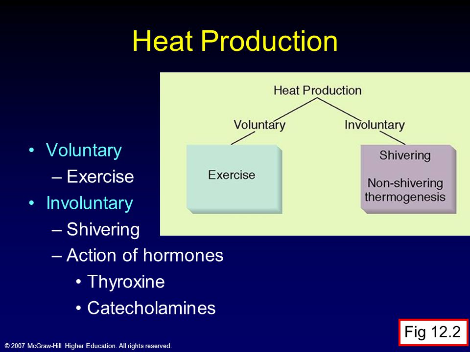 Heat Production Voluntary Exercise Involuntary Shivering