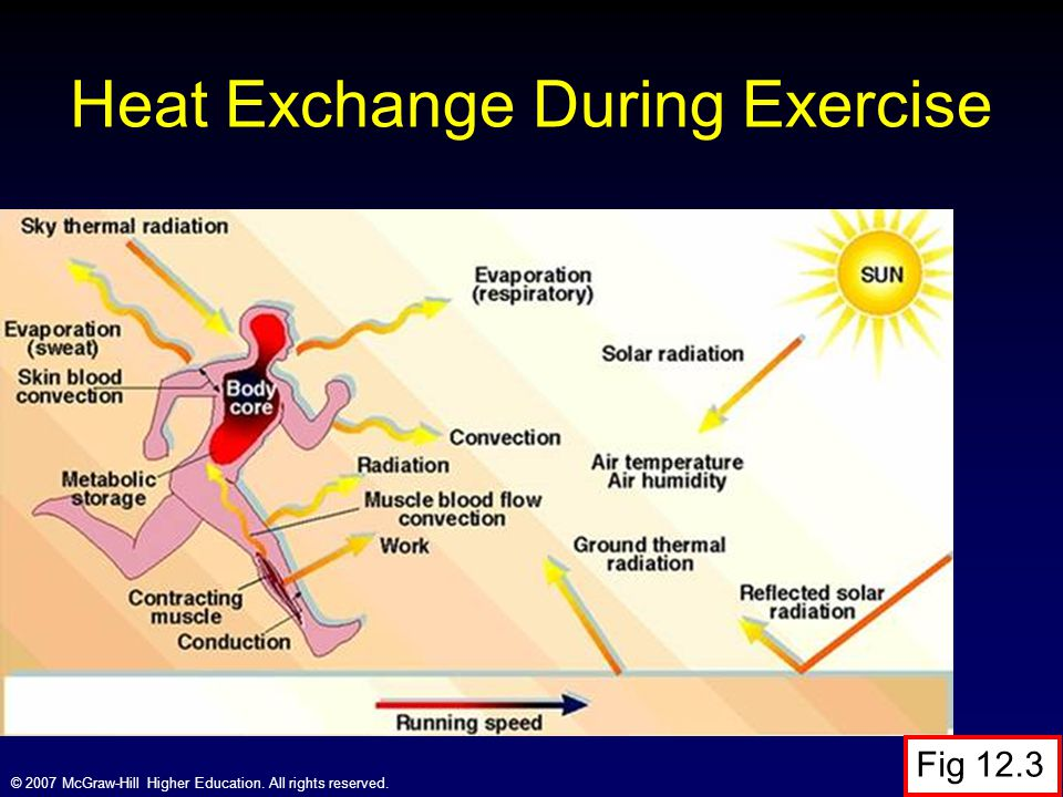 Heat Exchange During Exercise