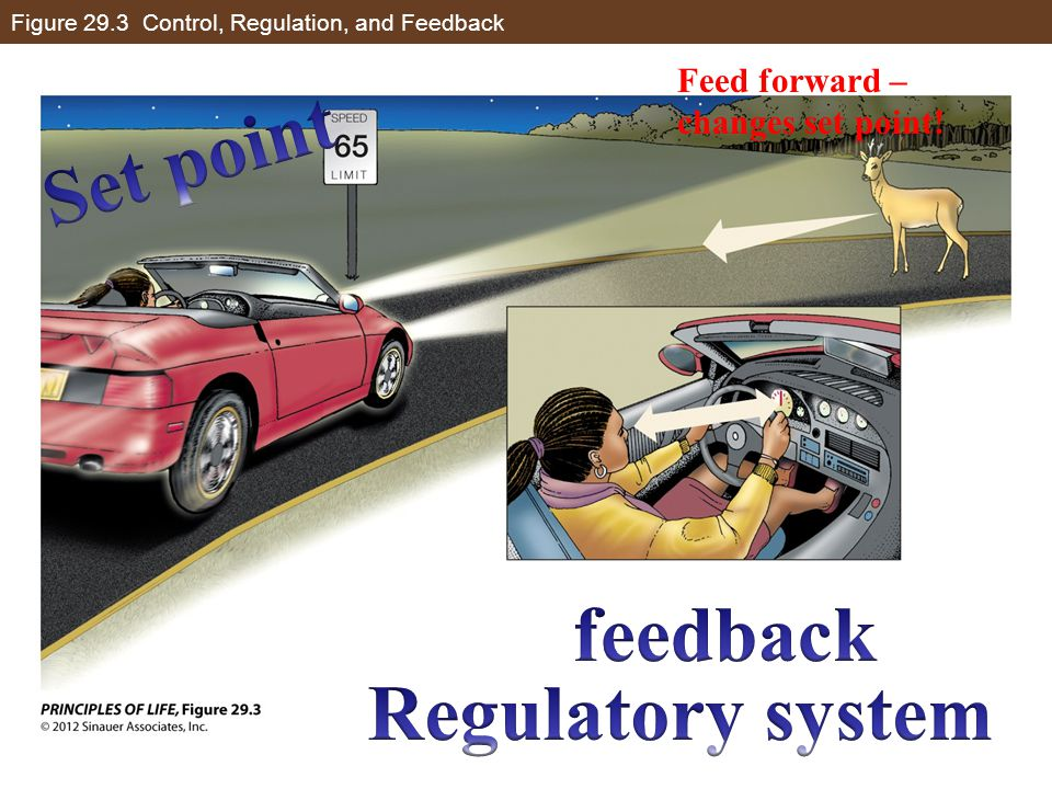 Figure 29.3 Control, Regulation, and Feedback