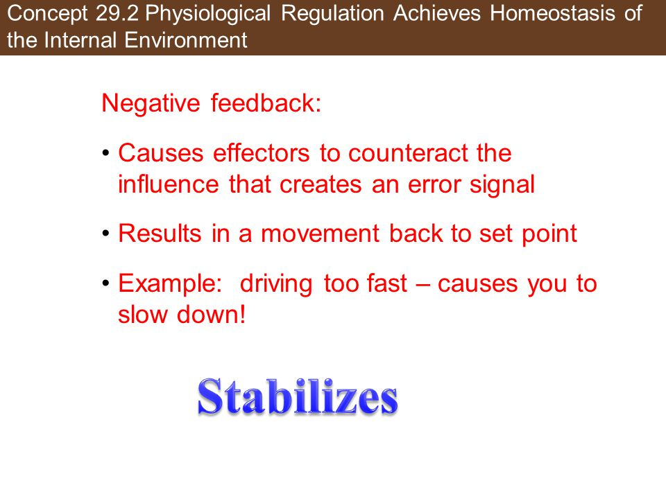 Stabilizes Negative feedback: