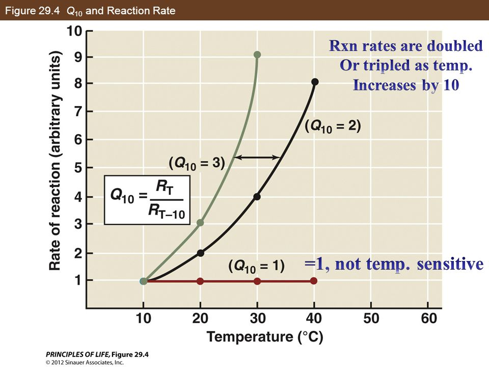 Figure 29.4 Q10 and Reaction Rate