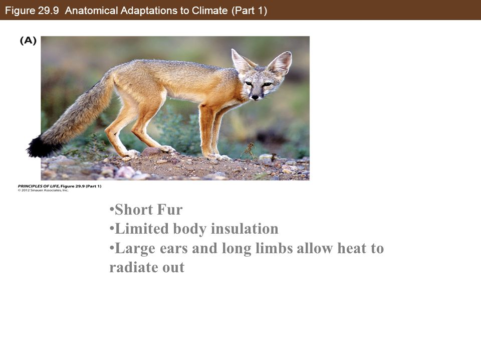Figure 29.9 Anatomical Adaptations to Climate (Part 1)