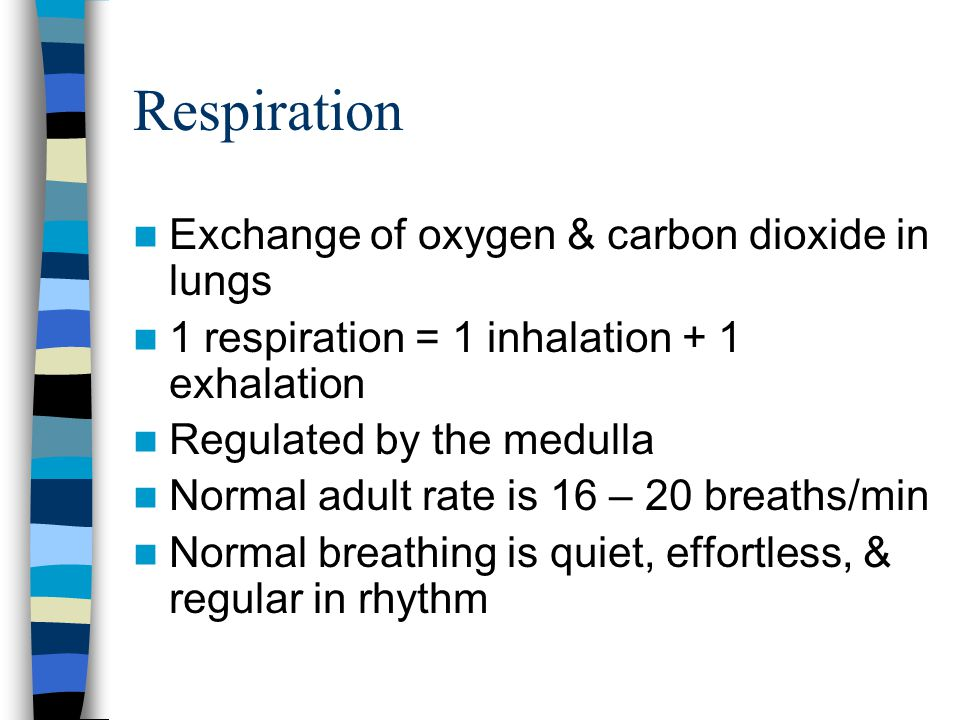 Respiration Exchange of oxygen & carbon dioxide in lungs