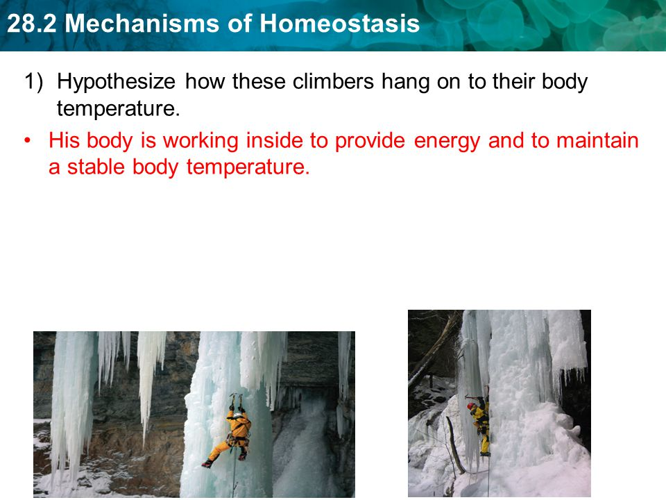 Hypothesize how these climbers hang on to their body temperature.