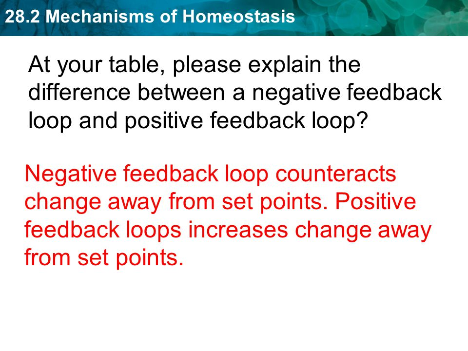 At your table, please explain the difference between a negative feedback loop and positive feedback loop