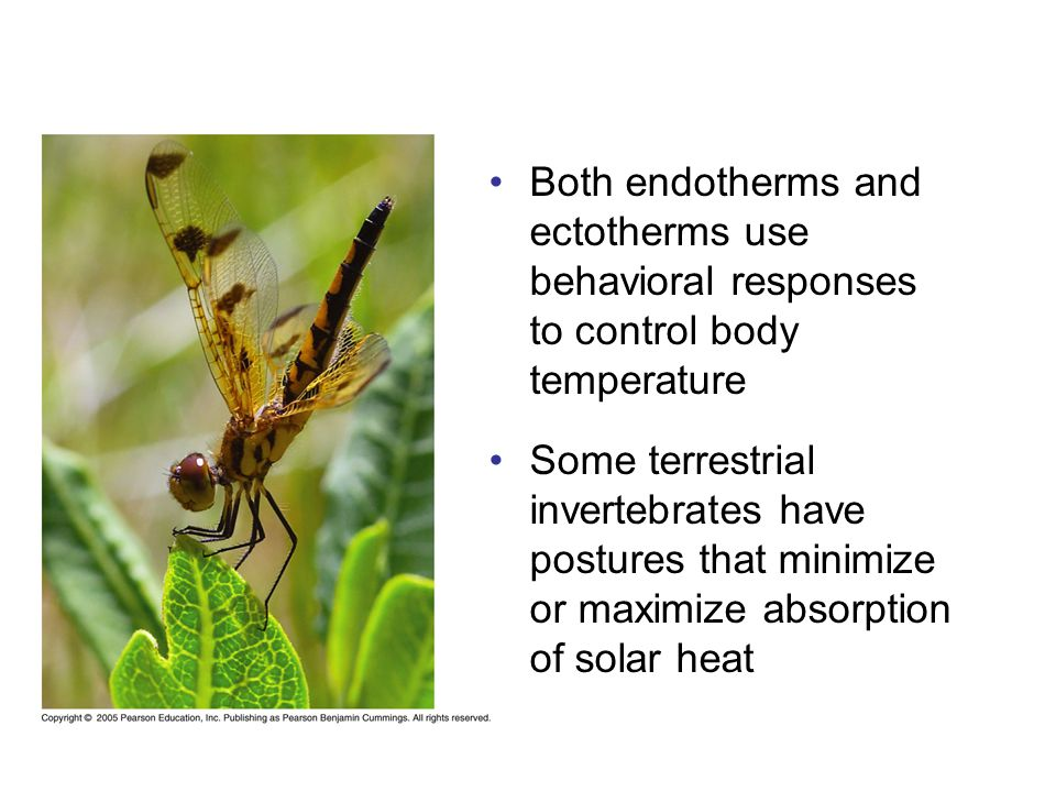 Both endotherms and ectotherms use behavioral responses to control body temperature