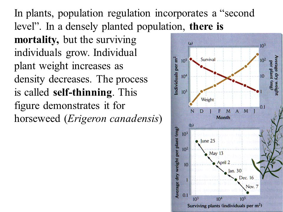 In plants, population regulation incorporates a second