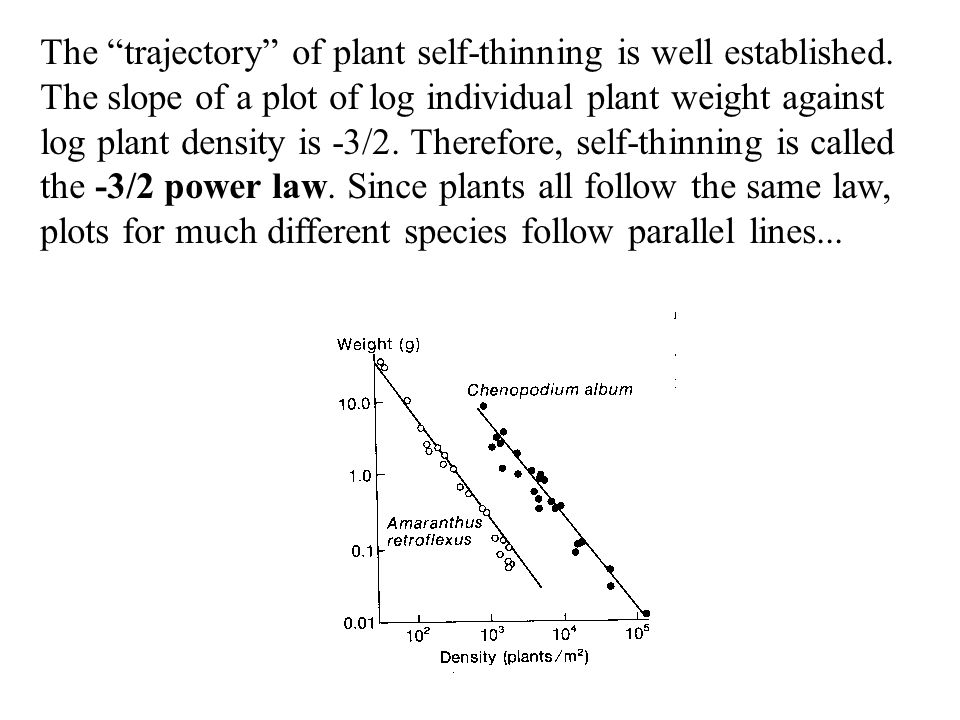 The trajectory of plant self-thinning is well established.
