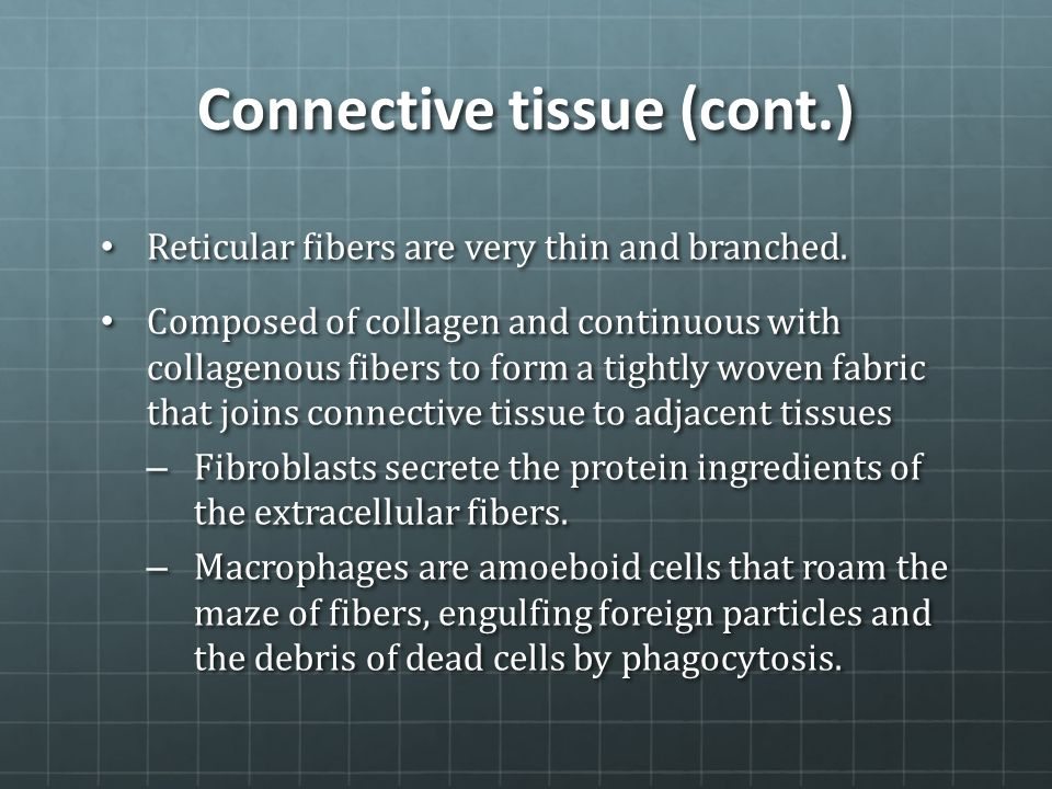 Connective tissue (cont.)
