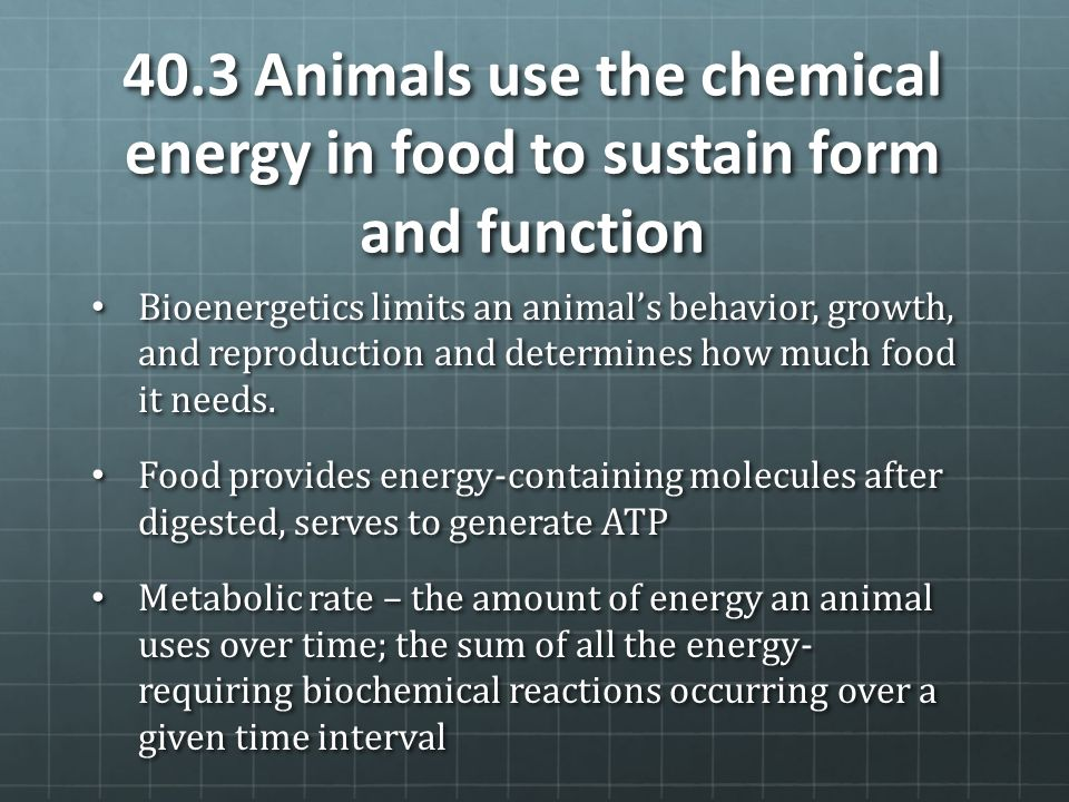 40.3 Animals use the chemical energy in food to sustain form and function