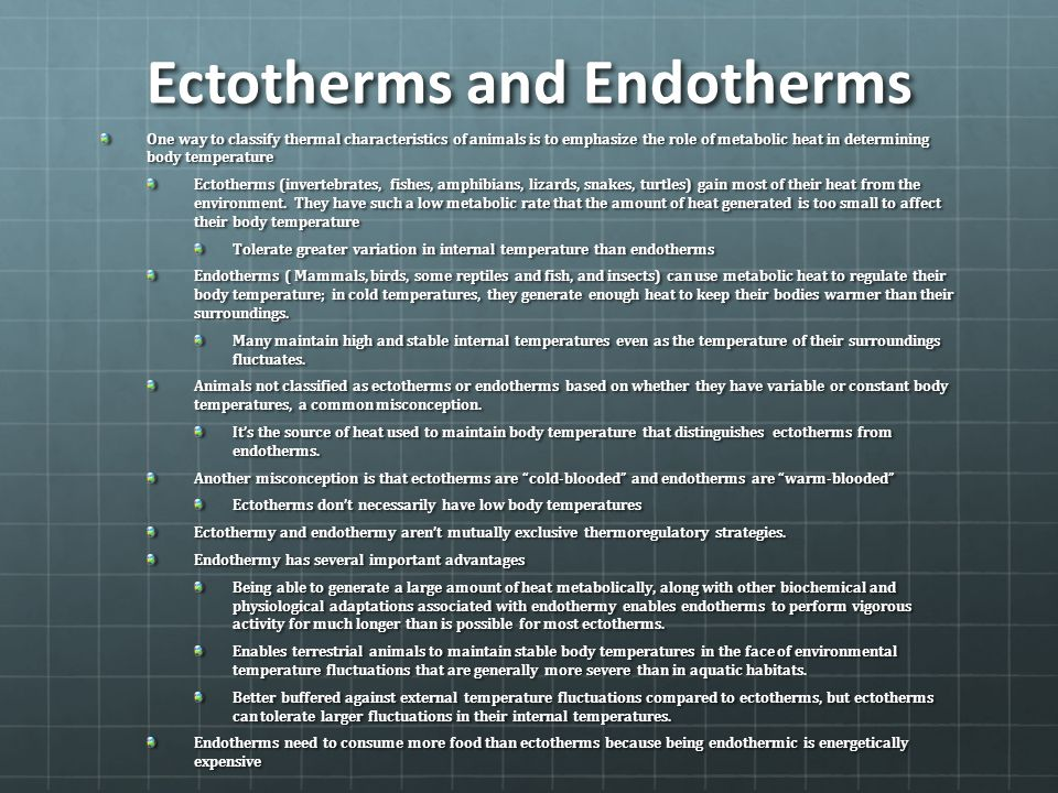 Ectotherms and Endotherms