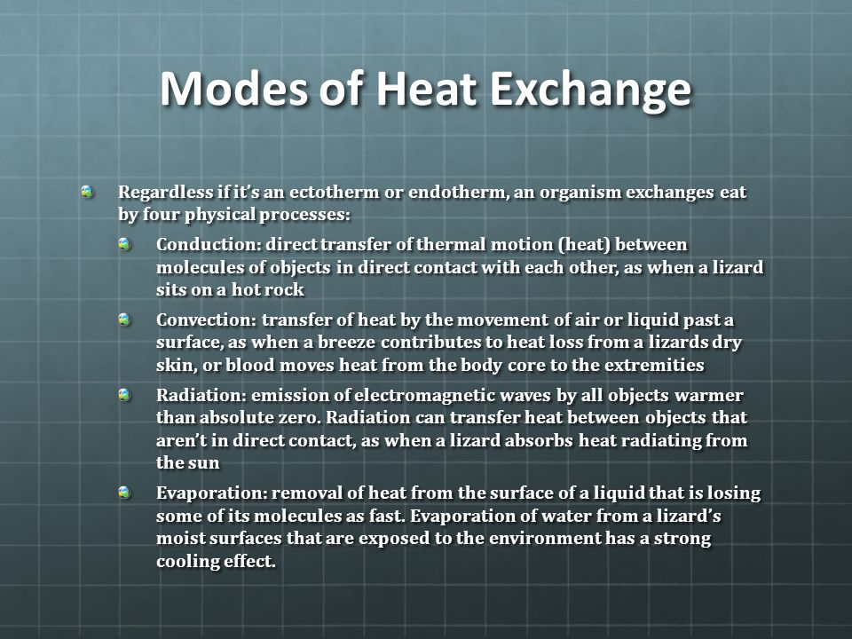 Modes of Heat Exchange Regardless if it's an ectotherm or endotherm, an organism exchanges eat by four physical processes: