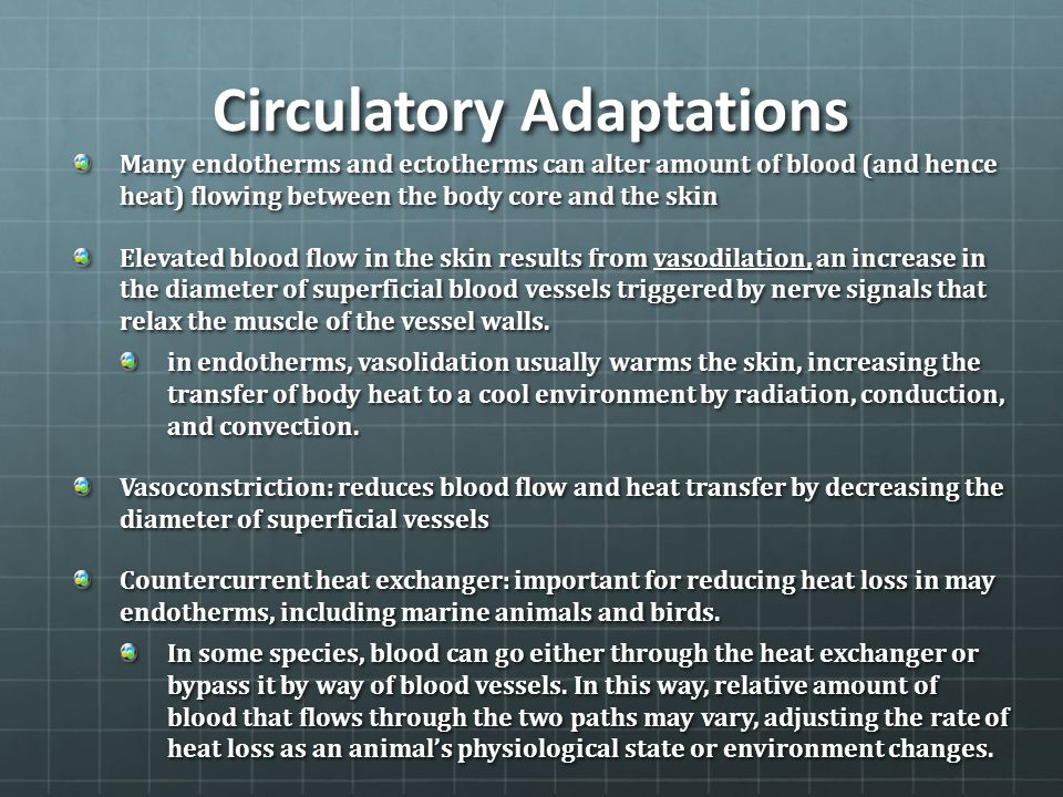 Circulatory Adaptations