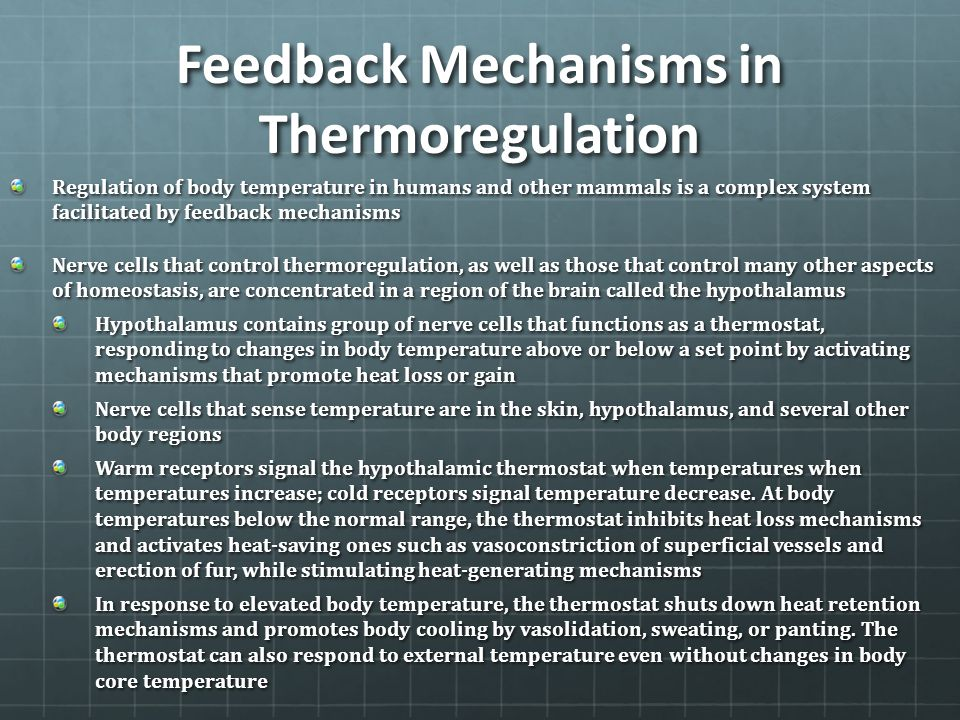 Feedback Mechanisms in Thermoregulation