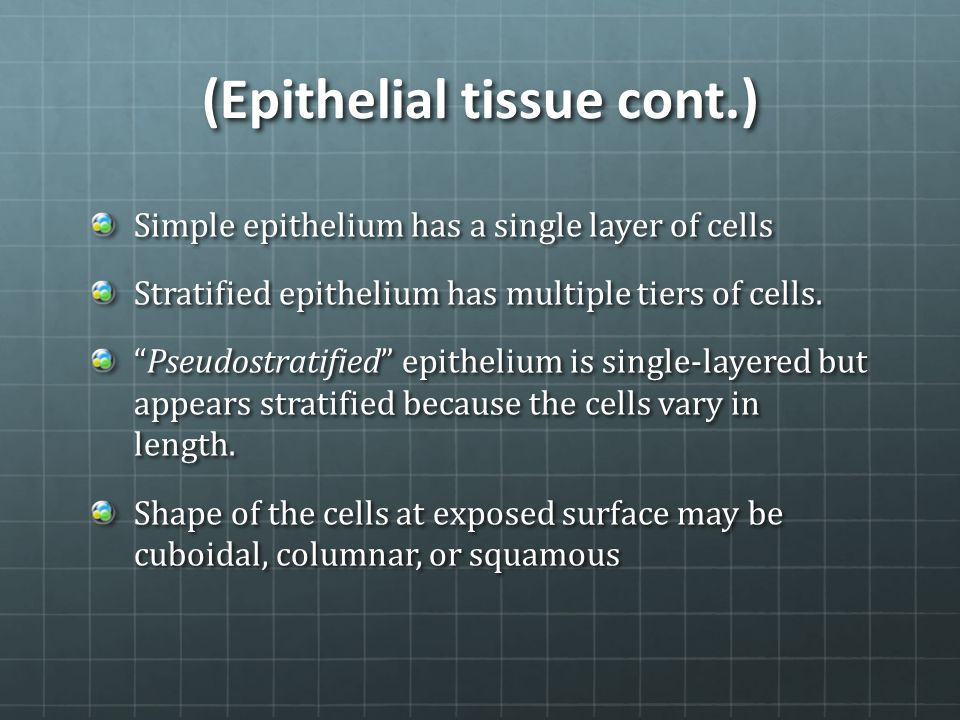 (Epithelial tissue cont.)