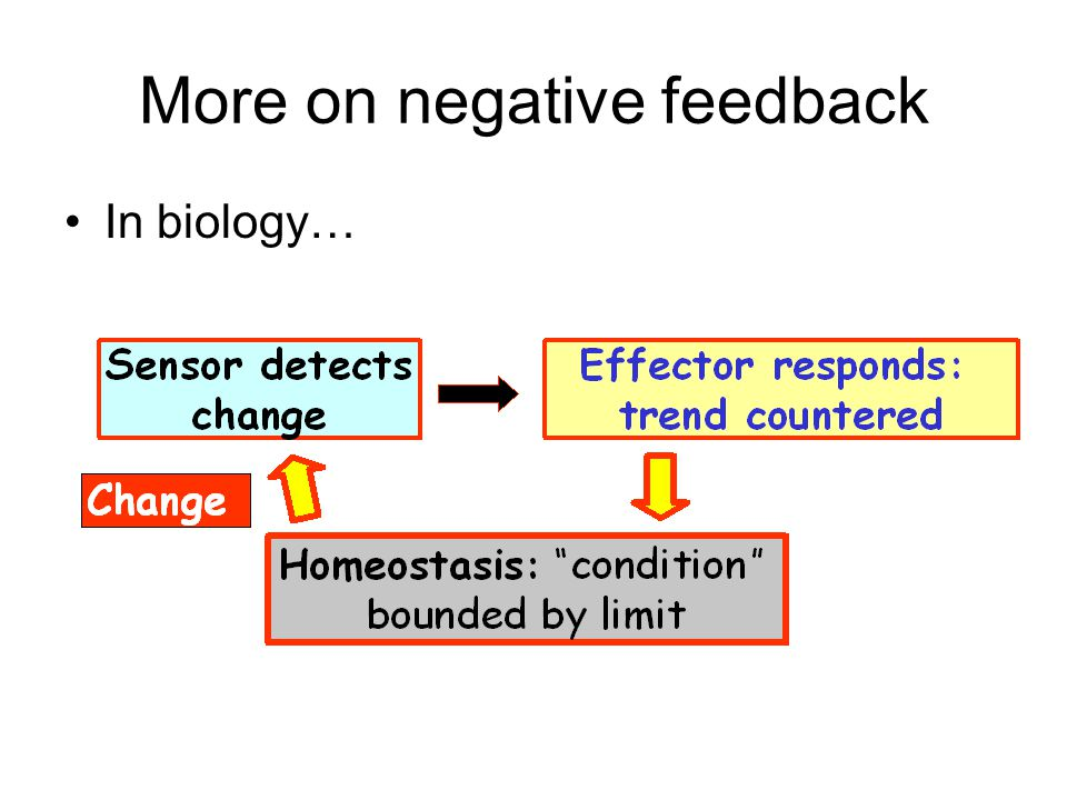 More on negative feedback