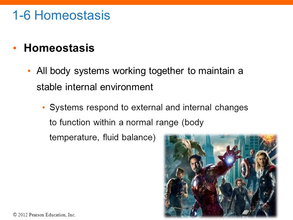 1-6 Homeostasis Homeostasis