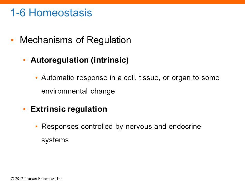 1-6 Homeostasis Mechanisms of Regulation Autoregulation (intrinsic)
