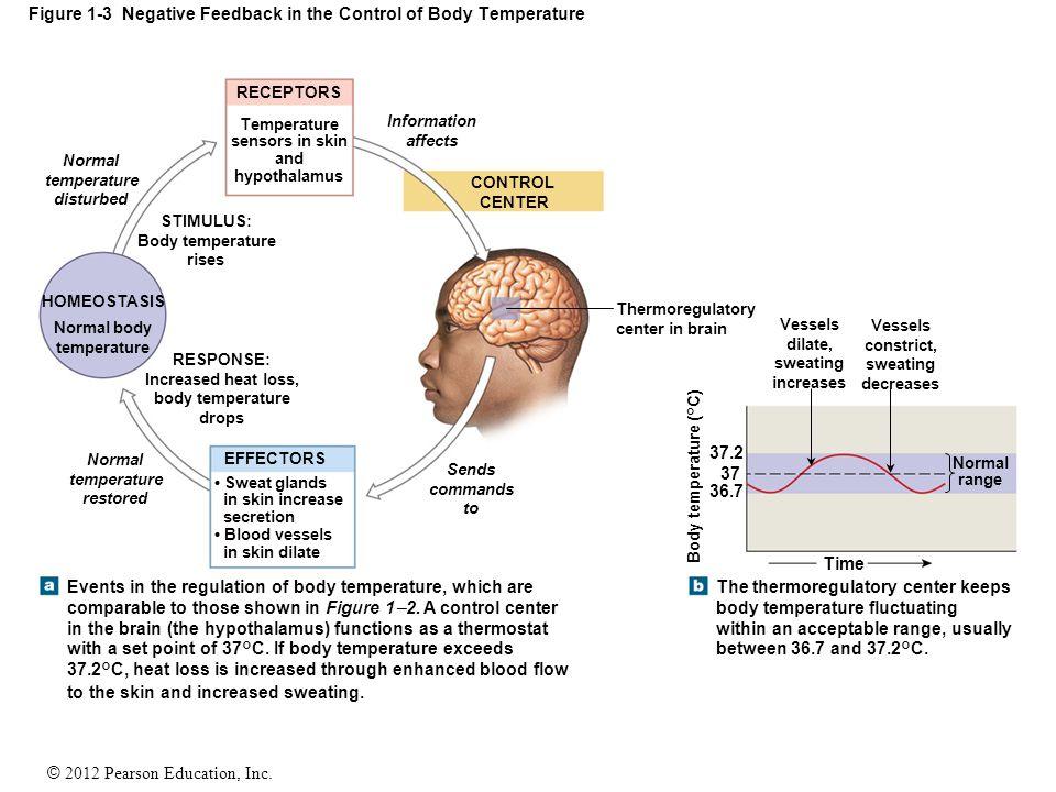 Figure 1-3 Negative Feedback in the Control of Body Temperature