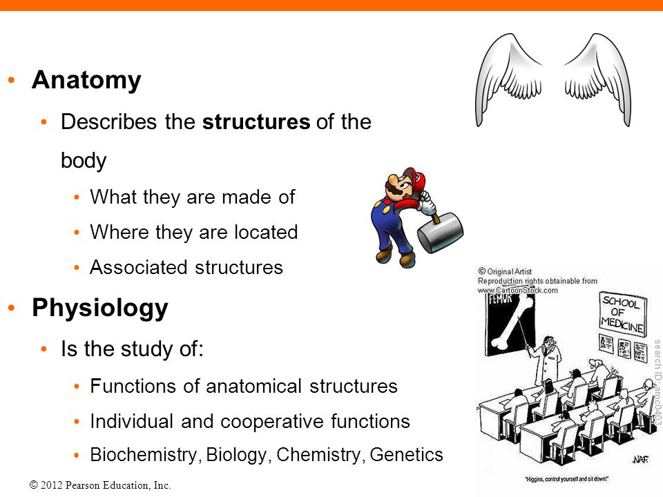 Anatomy Physiology Describes the structures of the body