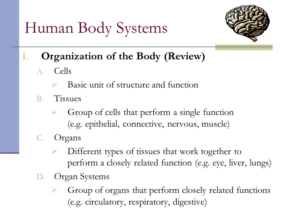 Human Body Systems Organization of the Body (Review) Cells