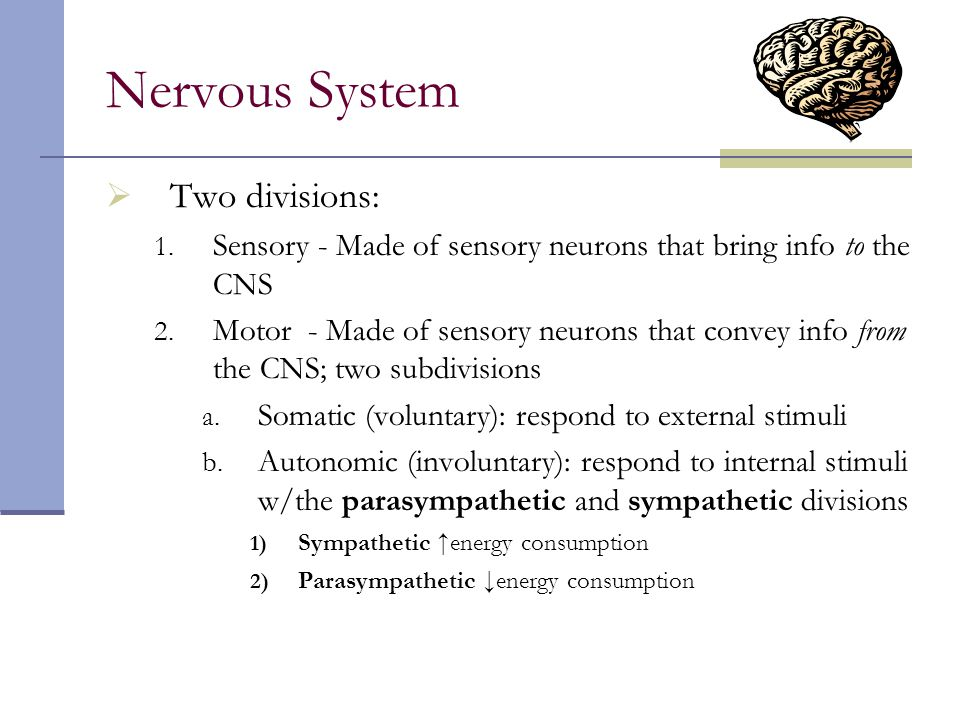 Nervous System Two divisions:
