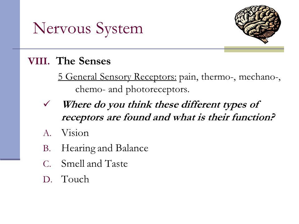 Nervous System The Senses