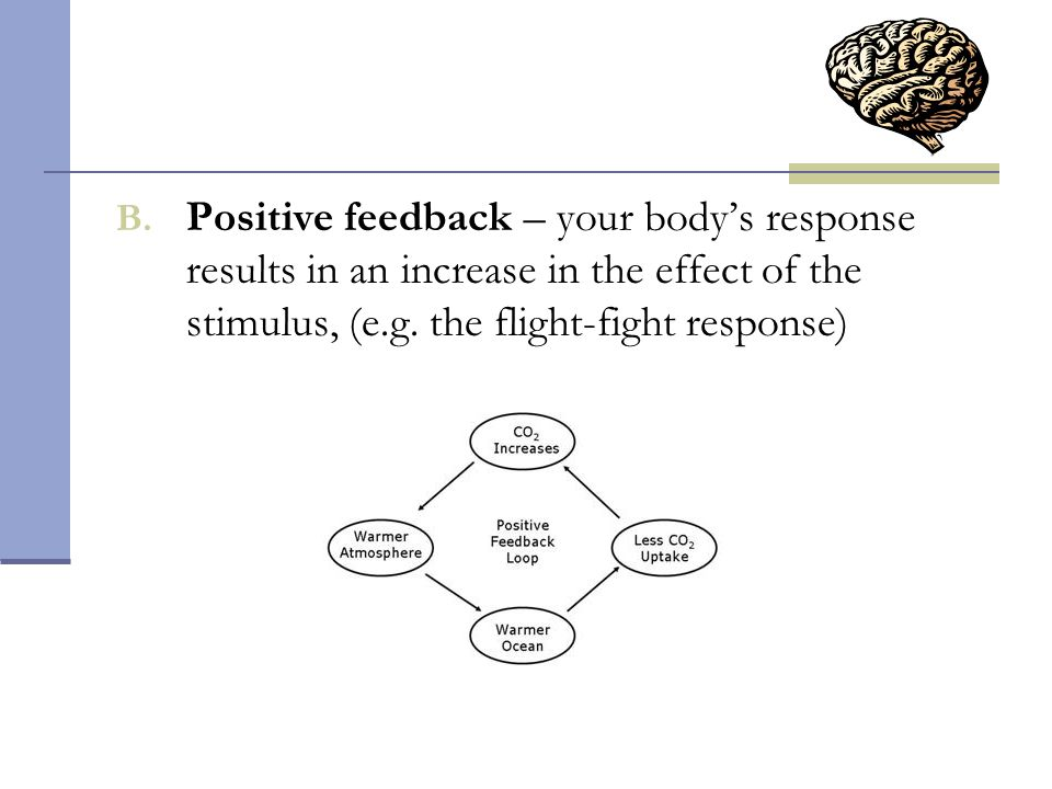 Positive feedback – your body's response results in an increase in the effect of the stimulus, (e.g.