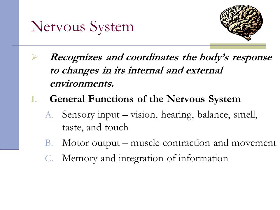 Nervous System Recognizes and coordinates the body's response to changes in its internal and external environments.