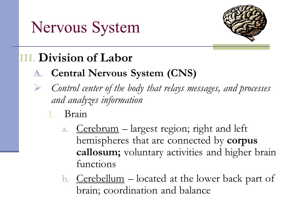 the brain a central control station of the human body Ring simultaneously throughout the entire human body  central nervous system (brain,  chapter 11: the nervous system 125 the brain.
