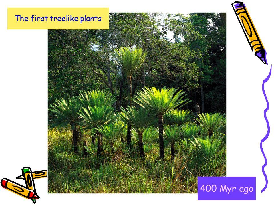 The first treelike plants
