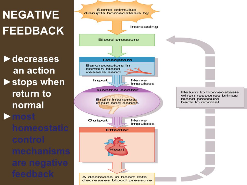 NEGATIVE FEEDBACK ►decreases an action ►stops when return to normal