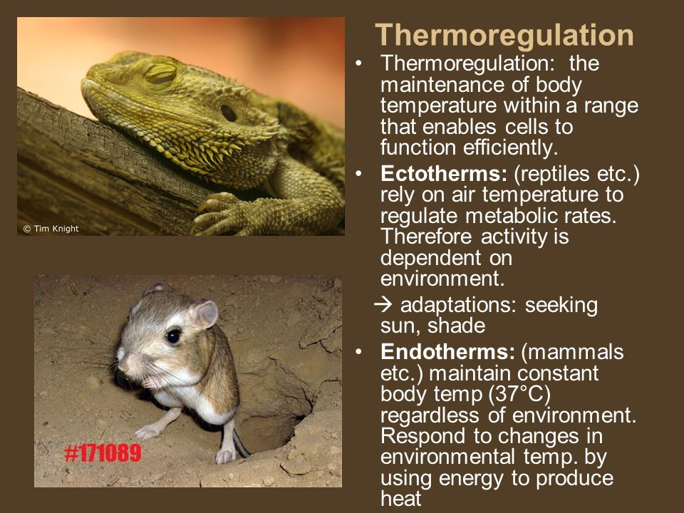 Thermoregulation Thermoregulation: the maintenance of body temperature within a range that enables cells to function efficiently.