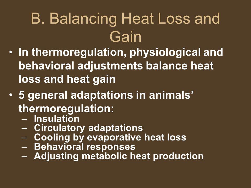 B. Balancing Heat Loss and Gain