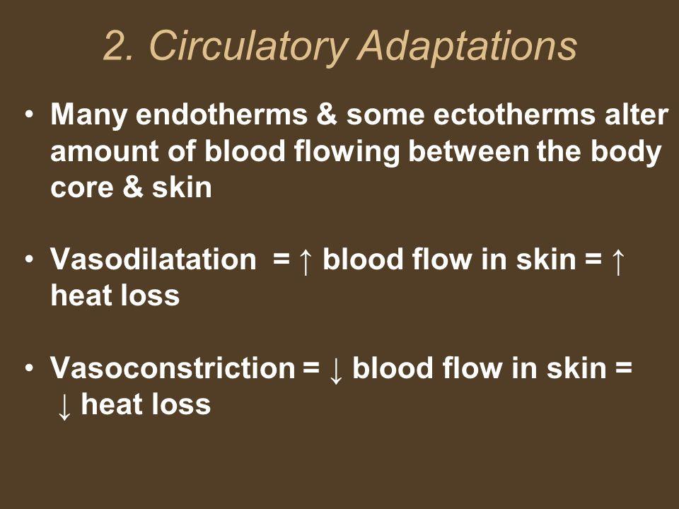 2. Circulatory Adaptations